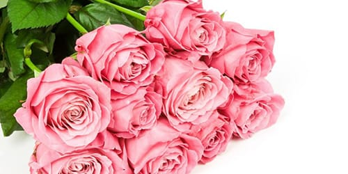 Сонник Розы белые приснились к чему снятся во сне Розы белые