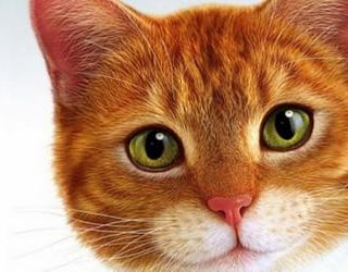 К чему снится рыжий кот?