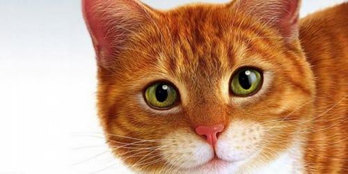 Тёмно рыжие коты
