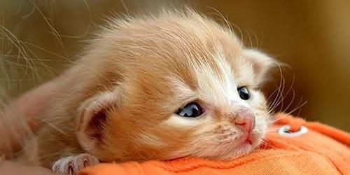 к чему снится рыжий кот во сне
