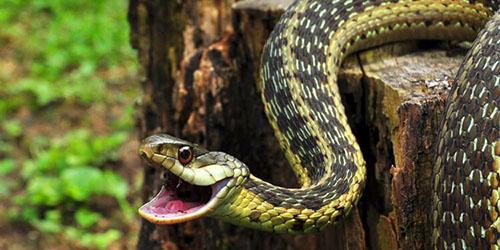 приснилось что укусила ядовитая змея
