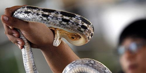 к чему снится что укусила змея за руку