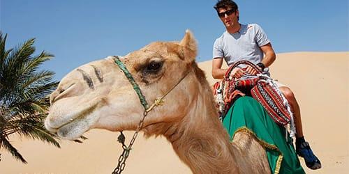 к чему снится кататься на белом верблюде