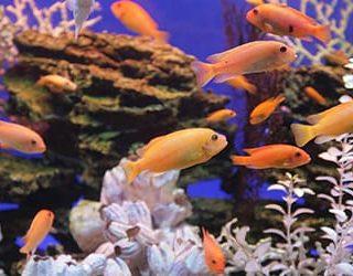 К чему снится аквариум с рыбками?