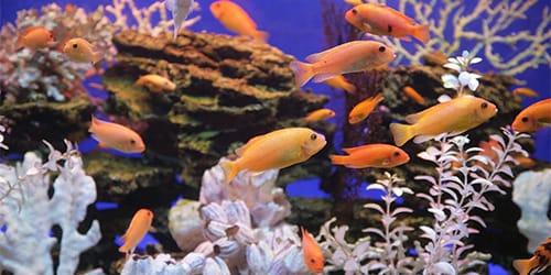сонник аквариум с рыбками