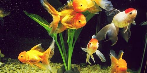 к чему снится аквариум с рыбками