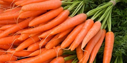 сонник морковь