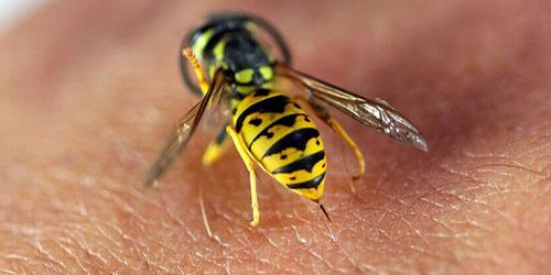 Приснился укус осы