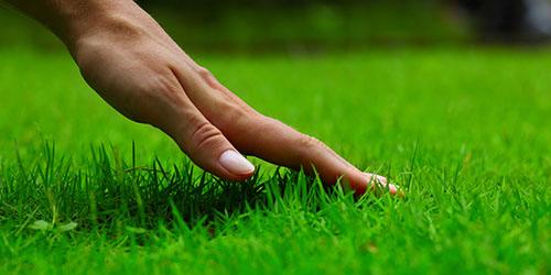 к чему снится зеленая трава во дворе