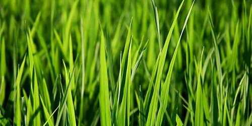 к чему снится зеленая трава во сне