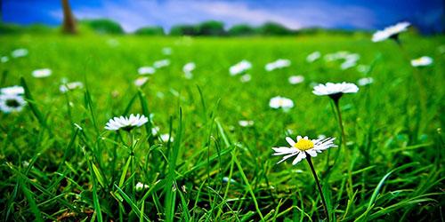 приснилась зеленая трава в поле