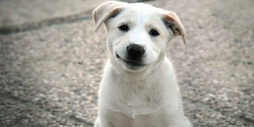сонник белая собака