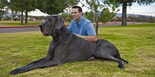 Фото Сонник большая пушистая собака