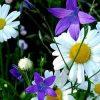 к чему снятся живые цветы