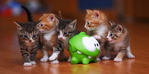 к чему снятся разноцветные маленькие котята