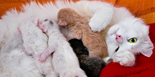 приснилась кошка с маленькими котятами