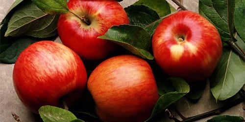 Сонник есть яблоки во сне вкусные красные