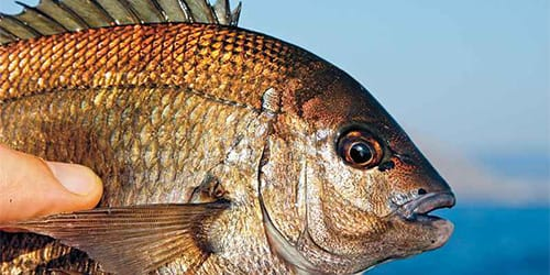 сонник ловить рыбу руками
