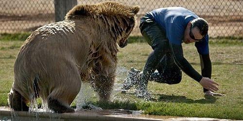 к чему снится медведь гонится