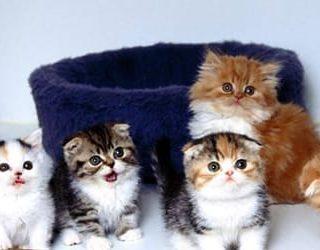 Много котят