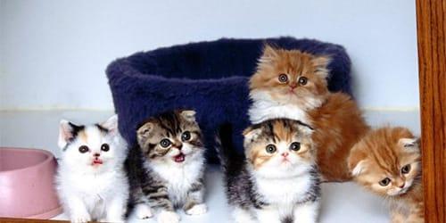 сонник много котят