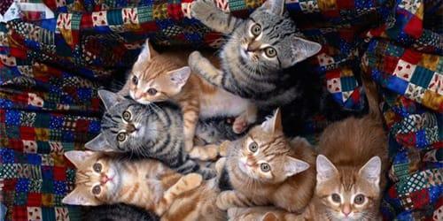 к чему снится много котят