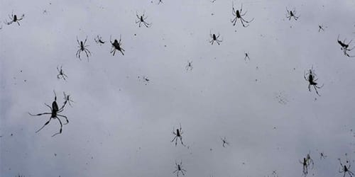 сонник много пауков