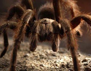К чему снится много пауков?