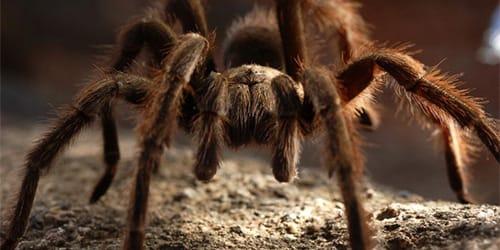 Сонник много пауков к чему снится много пауков во сне