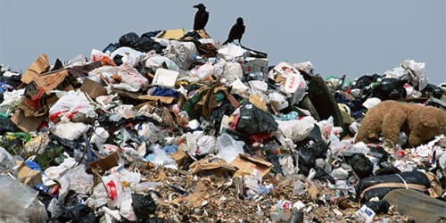 сонник мусор