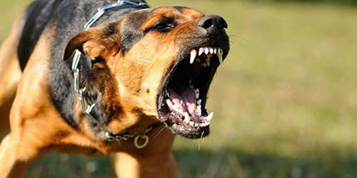 К чему снится что собака нападает?