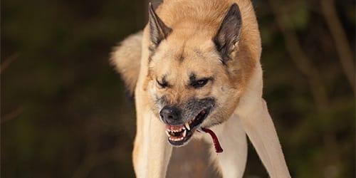 сонник нападает собака