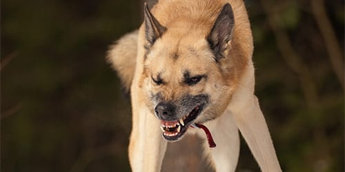 Фото Сонник напала большая собака