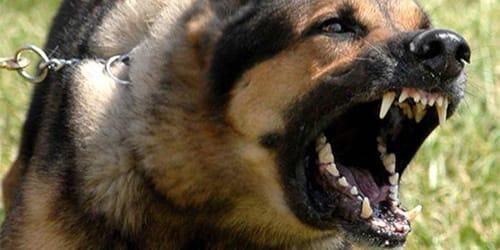 Фото Сонник злые собаки во сне