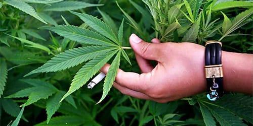 к чему снятся наркотики