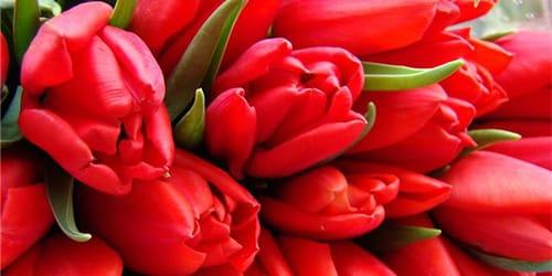 сонник тюльпаны