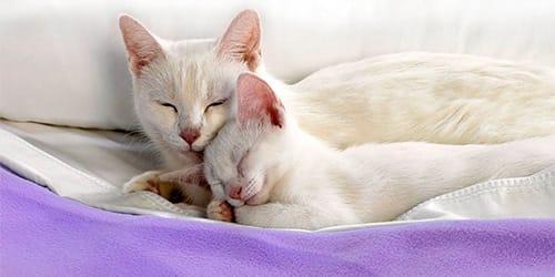 Кот черно белый во сне