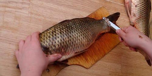 сонник чистить рыбу