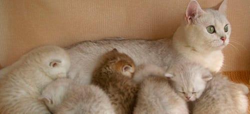 Куча котов во сне