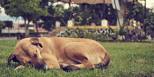 Видеть собственную собаку мертвой во сне