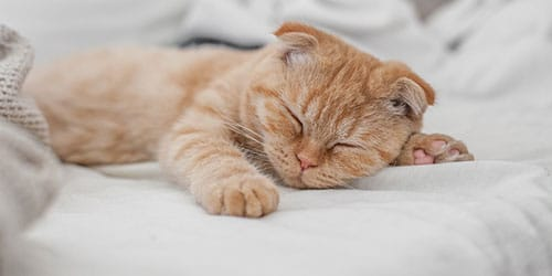 постель во сне