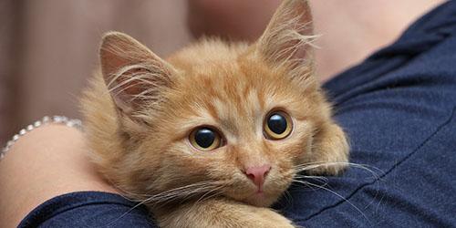 приснился рыжий котенок в доме