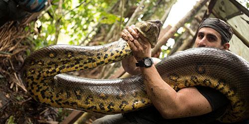 Приснилось убить огромную змею