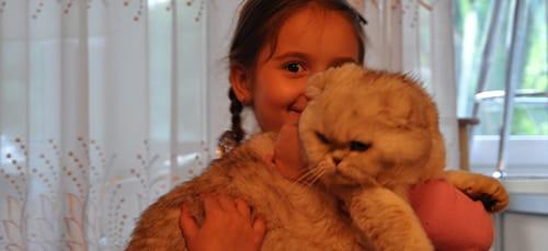держать кота во сне на руках