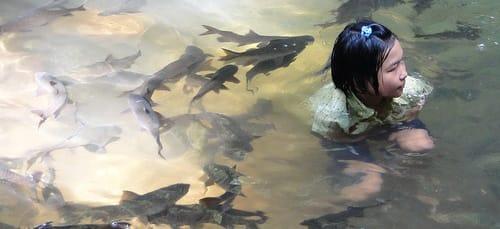 купаться с рыбами во сне