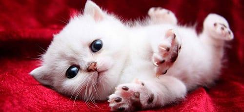 к чему снится новорожденный котенок