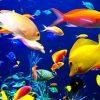 сонник рыбки