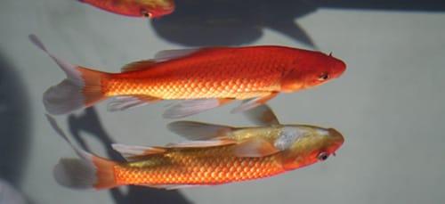 к чему снятся мертвые рыбки