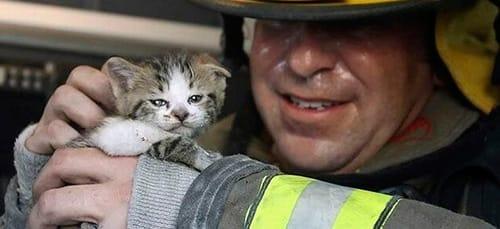 спасать котят