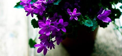 Если человеку снятся цветные сны, тогда ему необходимо вспомнить, какой именно цвет растений ему приснился.